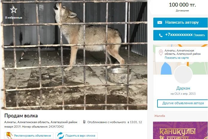 Объявление о продаже волка