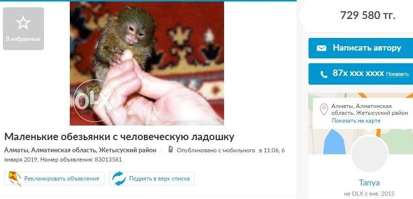 Объявление о продаже карликовой обезьянки