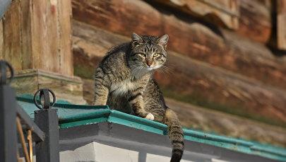 В привычно солнечный январский день пушистый друг уселся на одно из самых старых зданий в Астане