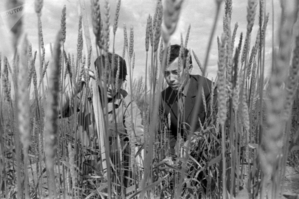 Студенты Целиноградского сельскохозяйственного института (ныне Казахский агротехнический университет имени Сакена Сейфуллина) на полях учебно-опытного хозяйства, архивное фото