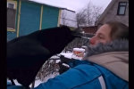 Вася ворон хочет кушать - видео