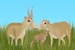 Численность сайгаков в Казахстане за 10 лет