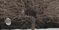 Кот забрался на дерево ради кормушки с едой