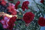 Возложение цветов к памятнику воинам 314 дивизии