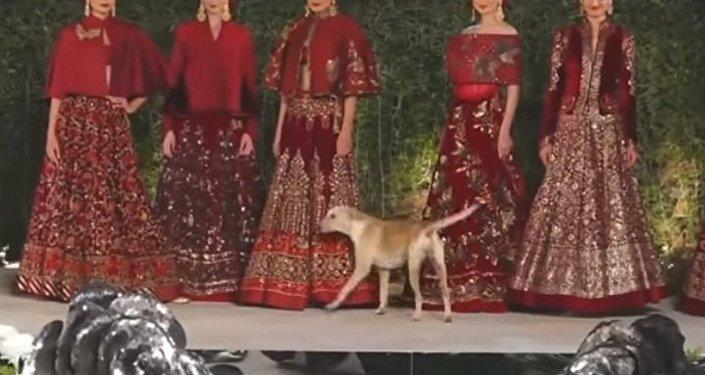 Собака выбежала на подиум и стала звездой шоу
