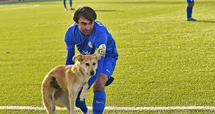 Капитан Иртыша Казбек Гетериев вынес пса с поля