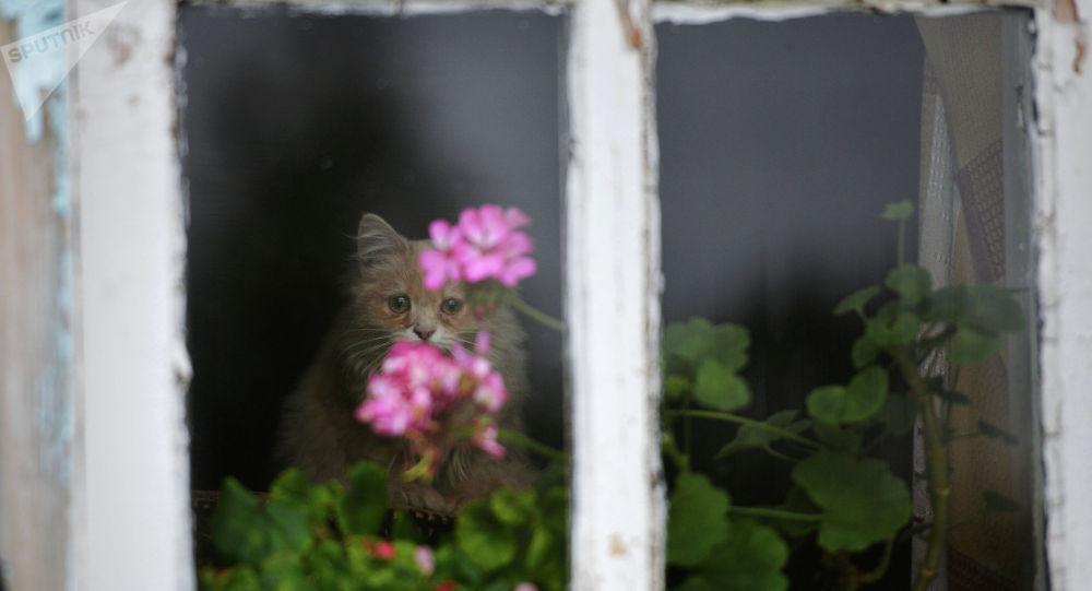 Кот сидит на окне, архивное фото