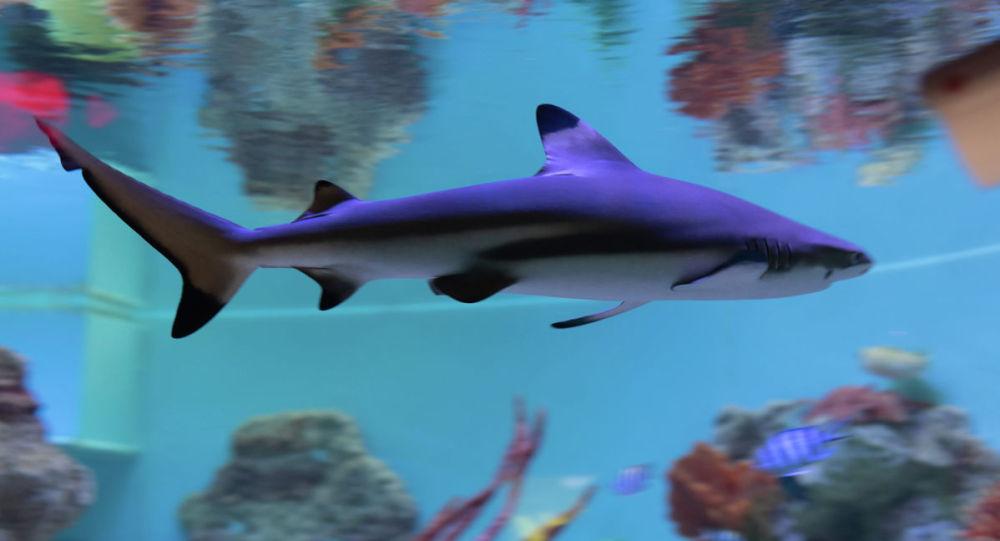 Акула, архивтегі фото