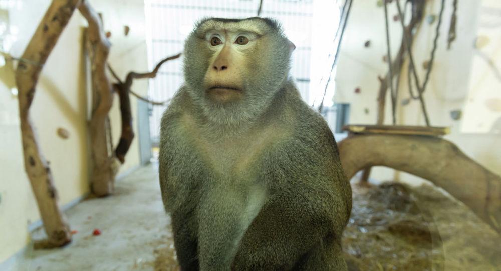 Дом приматов Алматинского зоопарка