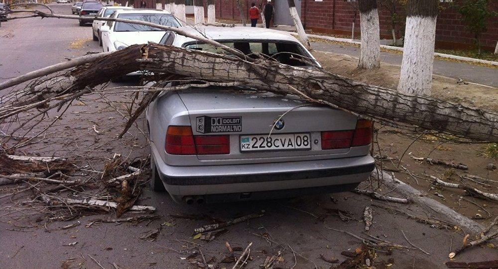 Ураган повалил деревья в Таразе