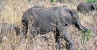 Слоны в национальном парке, архивное фото
