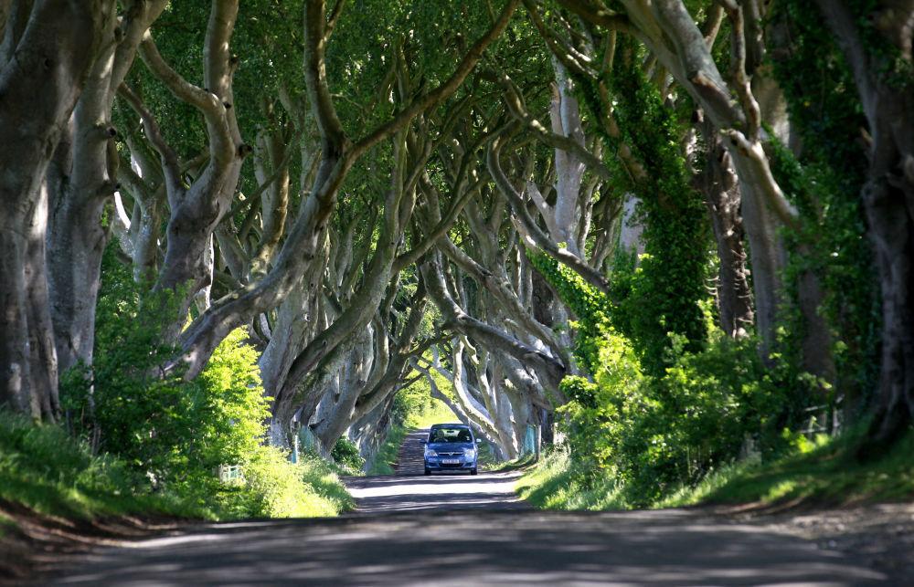 Лес Дарк Хеджес в Северной Ирландии