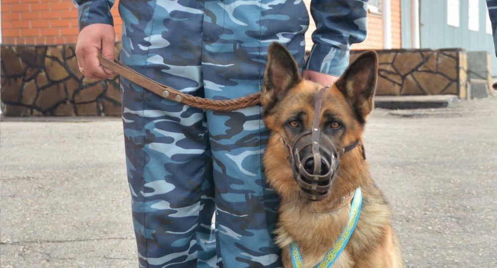 Лучшую собаку-полицейского проводили на пенсию