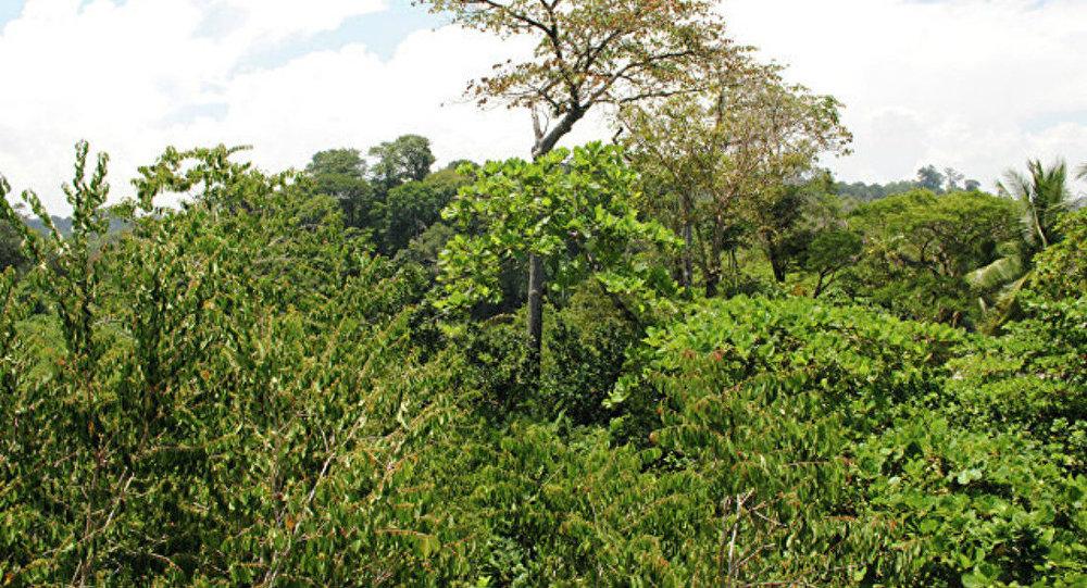Архивное фото джунглей