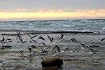 Каспийское море. Архивное фото - рекадр