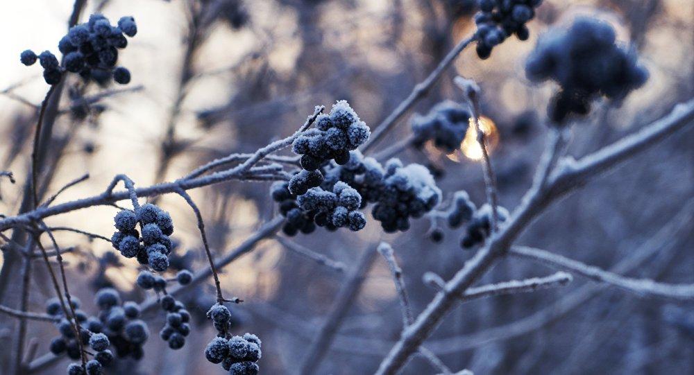 Зима вКазахстане предполагается ранней иснежной— Казгидромет