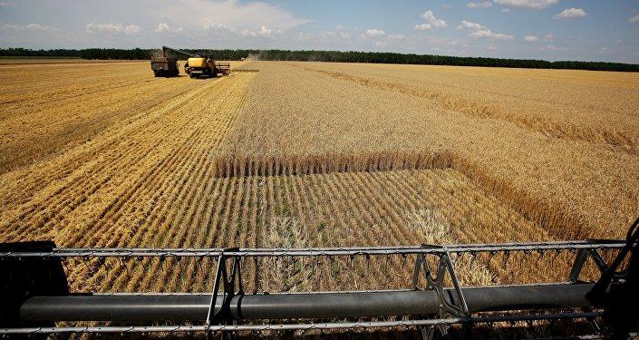 Архивное фото сбора урожая пшеницы