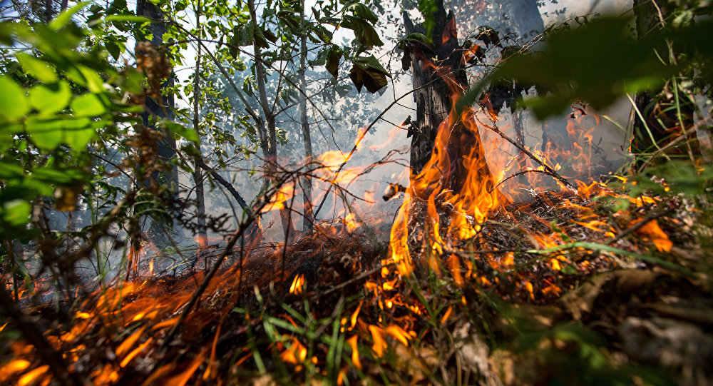 Трехдневный траур пожертвам лесного пожара объявлен вПортугалии