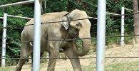 Архивное фото слона