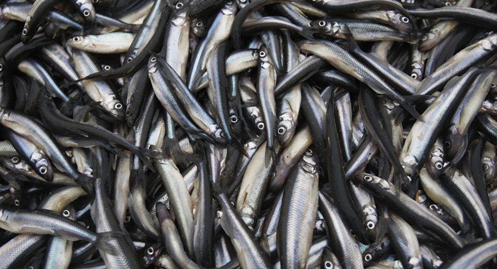 Архивное фото рыбной ловли